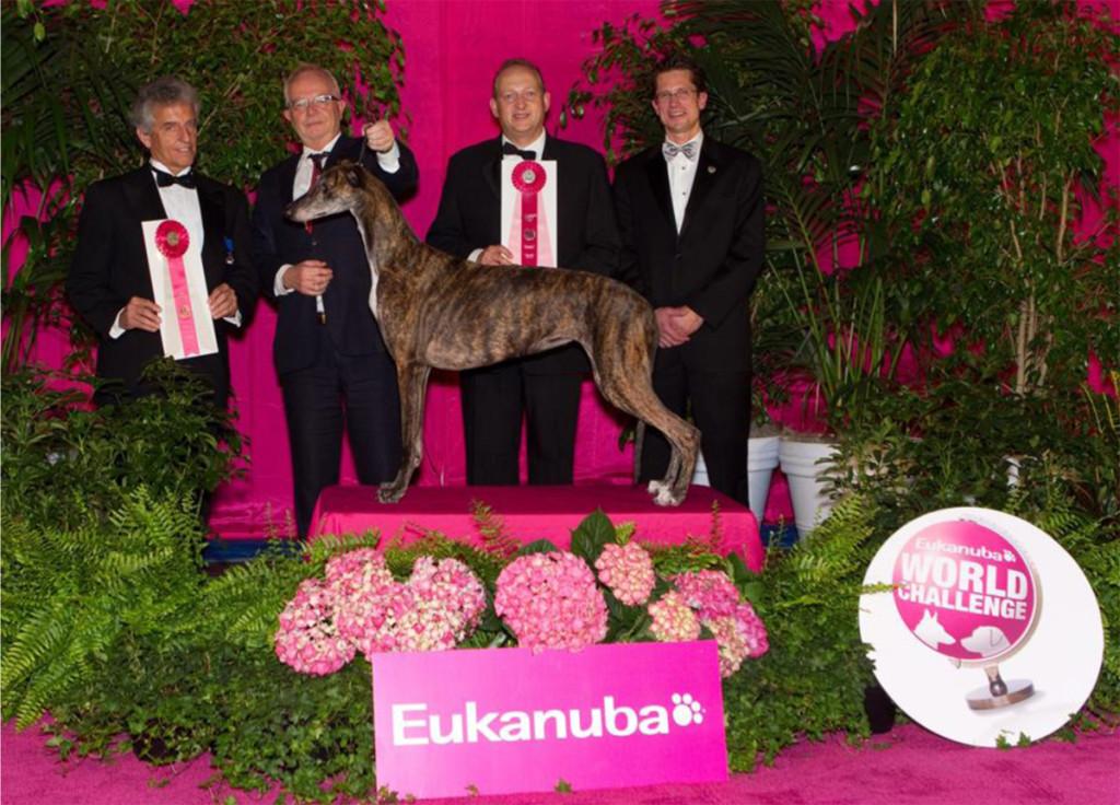 GreyhoundoftheYear2012