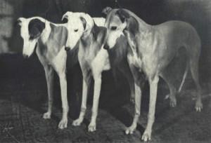 Ch Running Partridge, Int Ch Rare Pearl og Int Ch Treetops Rising Pheasant, tre meget viktige importer, som ligger bak de fleste av dagens hunder.